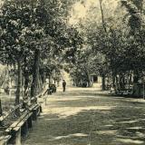 Екатеринодар. Аллея в Городском саду