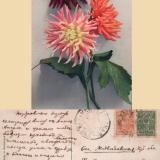 Екатеринодар, 12.01.1917 года
