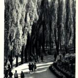 Краснодар. Уголок парка им. М. Горького