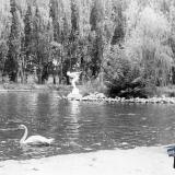 Краснодар. В парке Горького у пруда, 1961 год