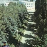 Краснодар. Аллея к зданию администрации ЗИП, 1983 год