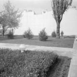 Краснодар. Цветник возле Дома политпросвещения. 1978 год