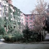 Краснодар. Двор дома по ул. Мира 44, вид на северо-восток, 1971 год