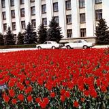 Краснодар. Клумба у здания Советов народных депутатов, 1970-е годы