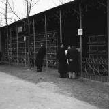 Краснодар. КСХПВ. Животноводческий сектор. Птичник с курами. 1956 год