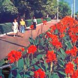 Краснодар. На перекрестке улиц  Тельмана и Красной. Вид на восток, 1963 год