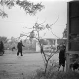 "Краснодар. Вид на остановку ""Выставка"", конец 1950-х годов"