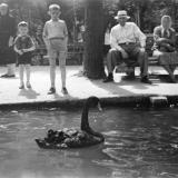 Краснодар. В горпарке на большом пруду, 1962 год.
