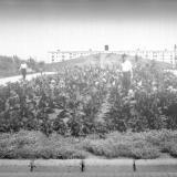 Краснодар. Вид на курган от улицы Светлой, 1961 года.