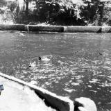 Краснодар. Озеро в парке им. Горького, лето 1964 года.