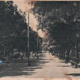 Майкоп. Аллея в парке, 1920-е