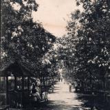 Новороссийск. Александровский бульвар. Цветущие акации, не позднее 1913 года