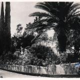 Сочи. Дендрарий, 1935 год