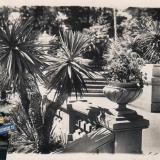 Сочи. Дендрарий. Часть главной аллеи, 1940 год