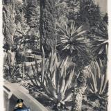 Сочи. Дендрарий. Группа юкк и агав, 1940 год