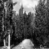 Сочи. Дендрарий (б. Худяковский парк). Кипарисовая аллея, 1934 год