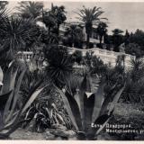 Сочи. Дендрарий. Мексиканский уголок. Агавы, 1951 год