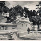 Сочи. Дендрарий. Нижняя терраса, 1952 год