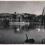 "Сочи. Парк ""Дендрарий"", 1967 год"