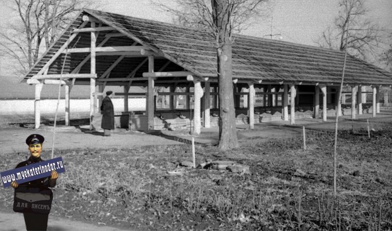 Краснодар. КСХПВ. Животноводческий сектор. Летний лагерь для коров. 1956 год