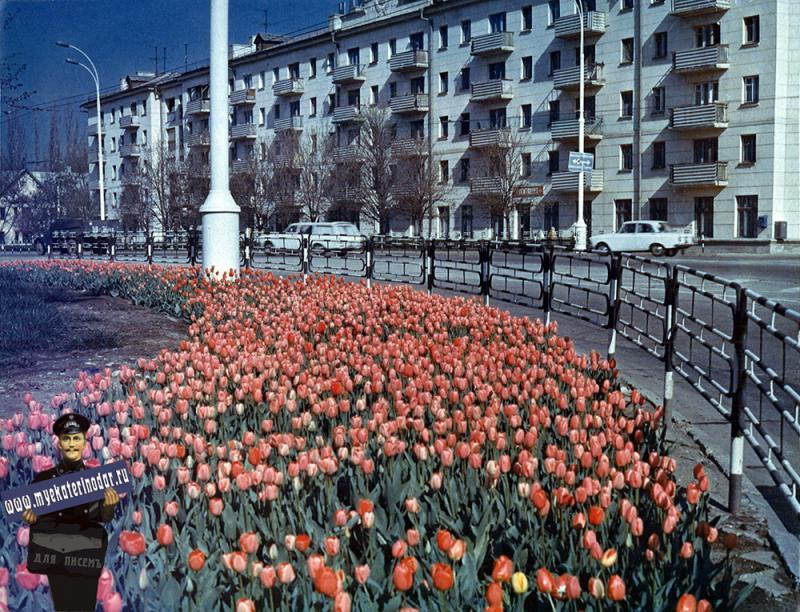 """Краснодар. Тюльпаны у кинотеатра """"Аврора"""", 1970-е годы"""
