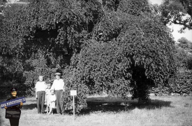 Краснодар. В горпарке, около 1960 года