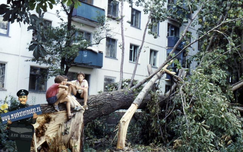 Краснодар. Упавшее дерево после ночной грозы на Димитрова 129 или 131, 1989 год.