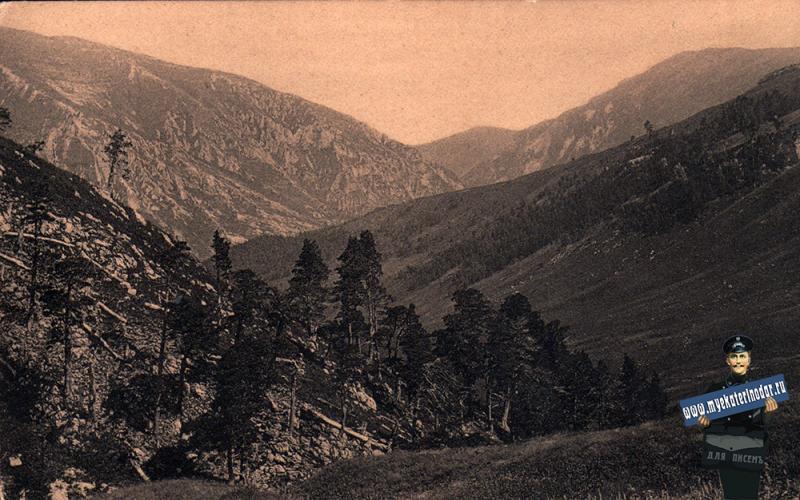 Майкоп. Серия I, №6. Сосновый лес в верховьях р. Цицы, до 1917 года