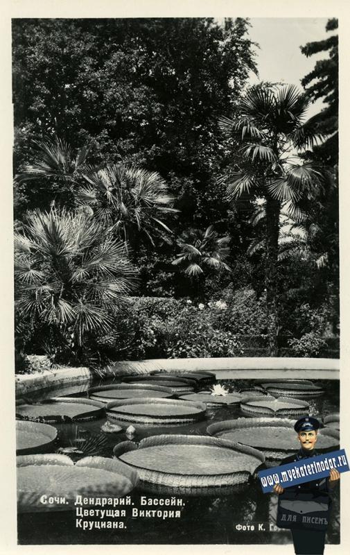 Сочи. Дендрарий. Бассейн. Цветущая Виктория Круциана, 1954 год